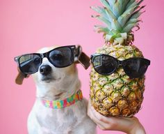 Puppies & pineapples  • photo by @dogsofinstagram •
