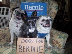 #dogsforbernie