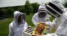 До 1.09 приемат заявления за плащане по пчеларската програма