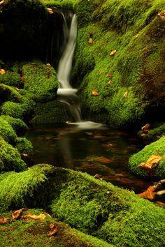 In the forest - Fundy National Park, New Brunswick, Canada, 2006 Beautiful Waterfalls, Beautiful Landscapes, Beautiful World, Beautiful Places, Simply Beautiful, Ed Wallpaper, New Brunswick, Paludarium, Mother Nature