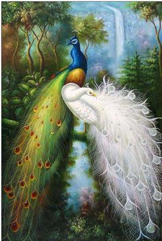 Birds of Heaven ♥)