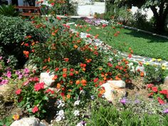 Ο λουλουδάτος κήπος του Γιώργου   Κηπολόγιο