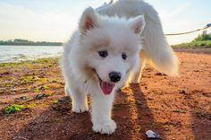 Summer puppy | Flickr - Photo Sharing!