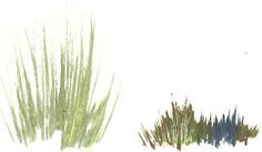 paint grass - thick clumps