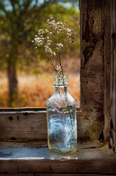 Country vase decor outdoors flowers trees woods country rustic