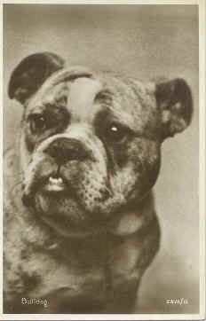 Bulldog - around 1920