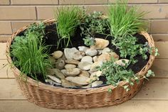 Make a cat-friendly basket brimming with special plants for your cat! Choose a combination to include Cat Mint, Cat Nip and Cat Grass.