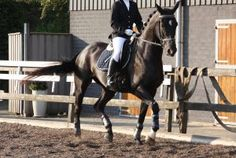 Used Horseback Riding Apparel Online and Where to Find it?.That perfect...Click for more: https://equestrianbootsandbridles.com/used-horseback-riding-apparel-online-and-where-to-find-it/