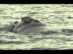 Avistaje de fauna marina en San Antonio Oeste, Puerto del Este y Las Grutas, Rio Negro