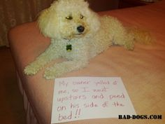 My owner yelled at me, so I went upstairs and peed on his side of the bed! #dogshaming #baddogs #funny
