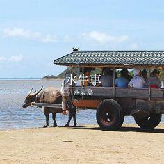 水牛車 西表島