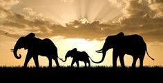 africa, one day i want to go on a safari Africa Map, Out Of Africa, Africa Travel, Elephant Family, Elephant Love, Elephant Outline, Elephant Silhouette, Elephant Walk, Beautiful Creatures