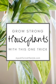 Grow Strong Houseplants with this One Trick Water Plants Indoor, Outdoor Plants, Container Gardening, Gardening Tips, House Plant Care, Replant, Organic Fertilizer, Plant Needs, Succulents Garden