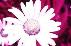 m'ama o non m'ama? by Giulia Barbero, via Flickr