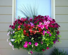 wave petunias, burgundy and lime green potato vines, million bells, marigolds and ornamental grasses.