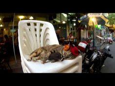 VLADIS feat. NICOLE - Žijem pre moment (OFFICIAL VIDEO) - YouTube
