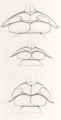 Top Tips, Tricks, And Techniques For The Perfect drawing tips Anatomy Art, Anatomy Drawing, Art Drawings Sketches, Pencil Drawings, Eye Drawings, Art Illustrations, Mouth Drawing, Drawing Heads, Nose Drawing