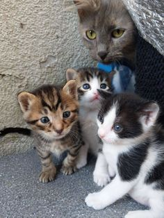 An adorable cat family by ozgurnevres cats kitten catsonweb cute adorable funny sleepy animals nature kitty cutie ca