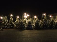 "I loved driving by the Christmas tree lots when I was a kid. I think that's when it felt like Christmas had ""officially"" started. Christmas Tree Sale, Fresh Christmas Trees, Christmas Light Displays, Christmas Time Is Here, Merry Little Christmas, Christmas Love, Winter Christmas, Christmas Lights, Xmas"