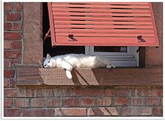 cats-in-windows-14