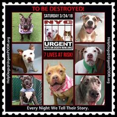 """***7 LIVES TO BE DESTROYED 03/24/18 @ NYC ACC***SO MANY GREAT DOGS ARE BEING KILLED: Puppies, Throw Away Mamas, Good Family Dogs. This is a HIGH KILL """"care center """" w/ poor living conditions . View tonight's list here: https://newhope.shelterbuddy.com/Animal/List and https://www.facebook.com/ACC.OfficialAtRiskAnimals/"""