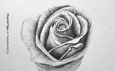 rose+drawing - Google-Suche