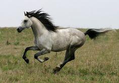 Wonderful shot of a beautiful animal