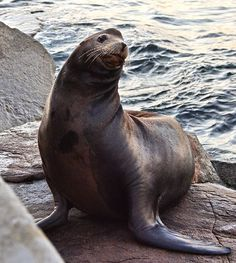 #naturephotography #nature #naturallife #animal#animalphotography #travel #travelphotography #travelusa #travelcalifornia #california #monterey #bay #pacificocean #southcalifornia #socal #pacificgrove #oldfishermanswharf #sealion #sealife #wildlife #adventure #explore #roadtrip #montereylocals #pacificgrovelocals- posted by PhotoBea https://www.instagram.com/photobeatrip. See more of Pacific Grove, CA at http://pacificgrovelocals.com