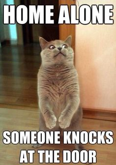 Home alone Someone knocks at the door