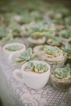 These succulents in tea cups can either be centerpieces or favors. Also a fun DIY. Source: stylemepretty.com #succulents #favors #centerpieces #DIY