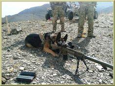 Moderner Kampfhund.jpg von Galeatus