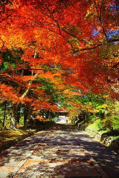 Het pad naar de Bishamon-do tempel, Kyoto, Japan Japanese Temple, Places To Visit, Places To Travel, Beach Wallpaper, Japanese Culture, Japan Travel, Mother Nature, Natural, Sunrise