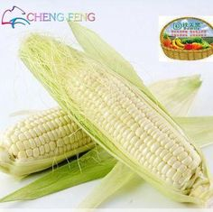20 Pcs/bag Corn Seeds Authentic Glass Gem Indian fruit Seeds Heirloom Rainbow Seeds Non-gmo Vegetable Seeds For Home Garden