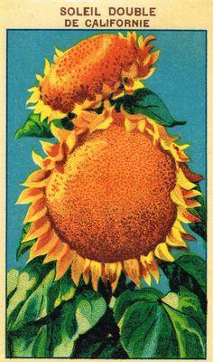 seed+packet+labels+001+(9).jpg (943×1600)