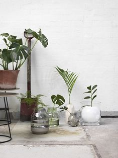 T.D.C | Terracotta pots and plants | Muuto SS 16