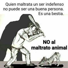 Quien maltrata un animal y se alegre de su dolor no puede ser buena persona, es una bestia. Denuncia el maltrato. (@CatDogSV) | Twitter