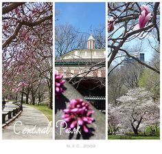 New York - Central Park New York Central, Central Park, Wedding Reception Venues, Reception Decorations, I Love Ny, Maybe One Day, Concrete Jungle, This Is Us, Dreams