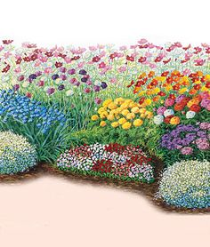 Burpee Designed Cutting Garden: aster, baby's breath, cornflower, cosmos, dianthus, marigold, scabiosa and zinnia -- $9.95