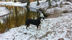 Entlebucher Sennenhund Goats, Animals, Entlebucher Mountain Dog, Animales, Animaux, Animal, Animais, Goat