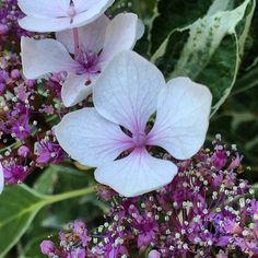 https://flic.kr/p/vcpBPs | Gorgeous flower in Sintra, Portugal ! #upsticksandgo #sintra #Portugal #Lisbon #flowers #naturephoto #travelgram #exploring #michfrost