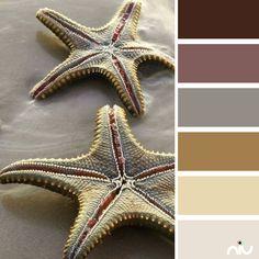 starfish (fauna)