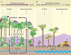 The effect of deforestation on rainfall.