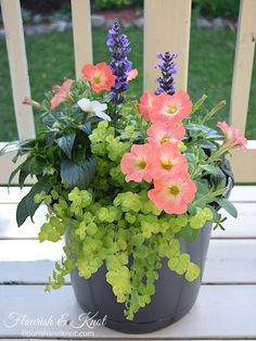 Pretty Planters 2 purple-blue salvia (thriller!) 2 white impatiens (filler) 2 coral petunias (filler-spiller) 2 creeping jenny (spiller) – this can be split up, so you don't need to buy 2 plants per planter!