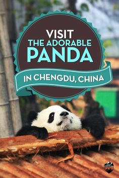 have you ever dreamed of seeing the adorable Panda, here's the completely guide…