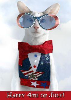 Spectacular Spectacles, Cat Adoption