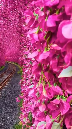 Wallpaper Nature Flowers, Beautiful Landscape Wallpaper, Beautiful Landscapes, Beautiful Gardens, Beautiful Rose Flowers, Amazing Flowers, Red Flowers, Beautiful Photos Of Nature, Nature Photos