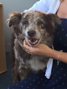 CT Lost Pets Page Liked · August 14 · Edited ·    REUNITED!  Found in Waterbury CT  Waterbury Dog Pound  Just found this sweet old girl wandering on Willow St. Waterbury. Collar but no tags. Please help! 203-528-3875