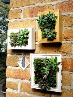 Succulent wall planters - Succulents are my favorite! Succulent Wall Planter, Succulent Frame, Hanging Succulents, Succulents In Containers, Cacti And Succulents, Hanging Planters, Cactus Plants, Wall Planters, Air Plants
