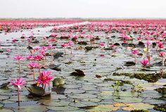 LAGO DI NONG HARN (THAILANDIA)