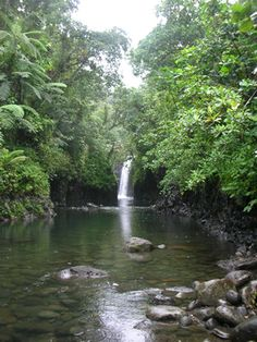 """Taveuni Fiji Hike the falls on the """"Garden Island"""" The runways are lined with flowers and palms ..."""